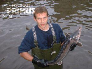 Fischgut Primus