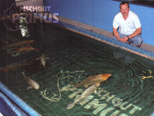 Sturgeon, Koi-carp, fish for consumption and costruction of recirculation systems