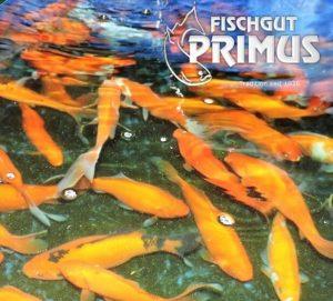 laichgoldfische
