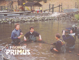 """Flipper"" only an old hat! At Primus´farm the sturgeons are the stars"