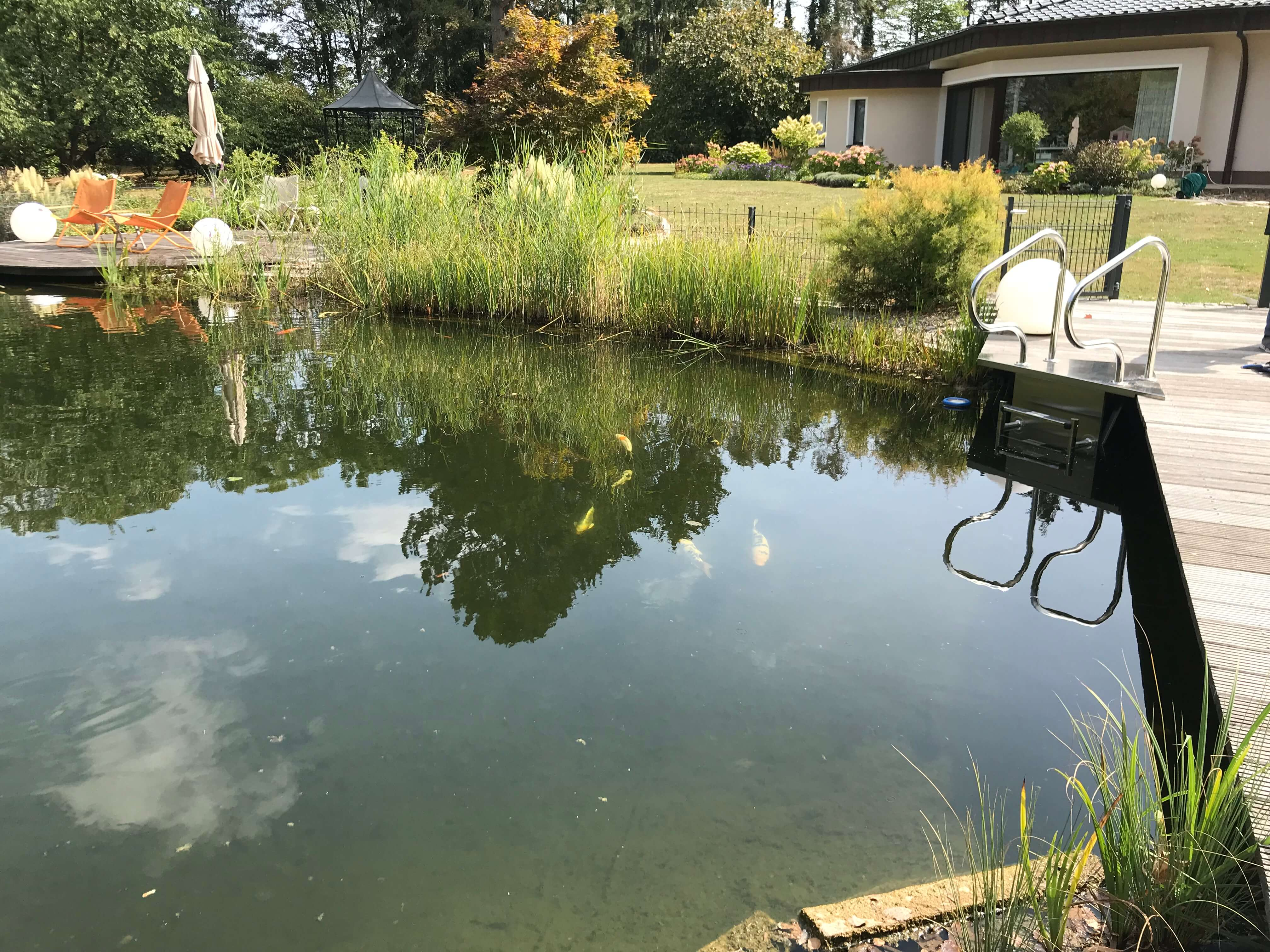 Top Fischgut Primus | Teichservice | Koi- und Störfarm #GN_33