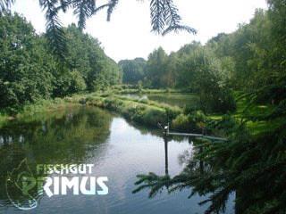 fischgut-primus.de-fischlando.de-stoerfarm-und-koifarm-iserlohn-fischzucht-18